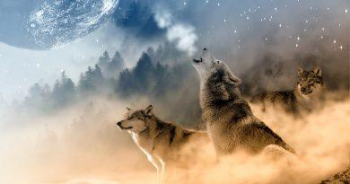 Câu chuyện suy ngẫm: Chó và Hồ Ly